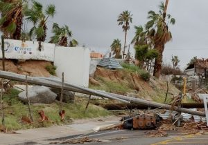 Read more about the article Hurricane Hit Most Part of the Floral Industry of Tucson