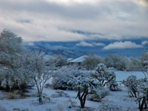 Read more about the article Snow Falls on Tucson, Multiple Road Closures